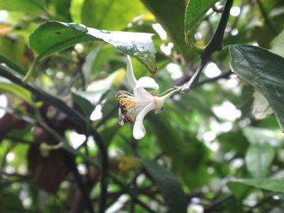 lime&bee