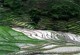 ネパール棚田