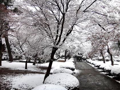 豪徳寺雪化粧01