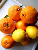 M's orange.jpg
