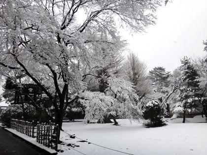 豪徳寺雪化粧02