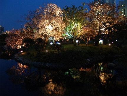浜離宮夜桜2_big