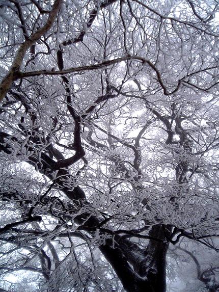 樹氷3.jpg
