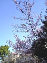 桜とインコ.jpg