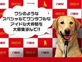アイドル犬「GNT41」オーディション