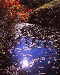 蝶槍山麓の池