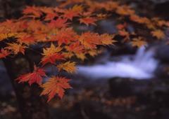 栃木県民の森_2