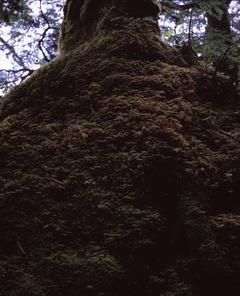 白駒池の苔