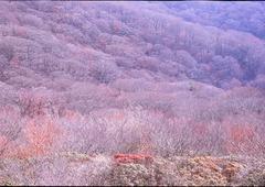 天城 冬景