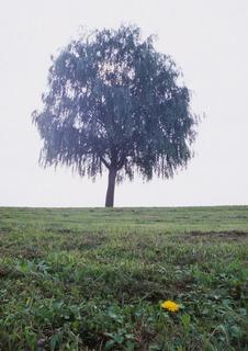 樹木とタンポポ 24mm