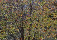 神奈川県 四季の森