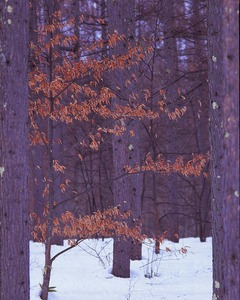 森の冬情景