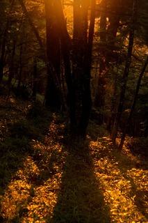 雲取キャンプ場の朝