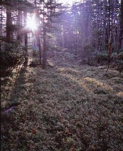 白駒湿原 朝陽入射