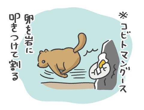 200121_こびとマングース06