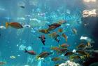 魚たち300