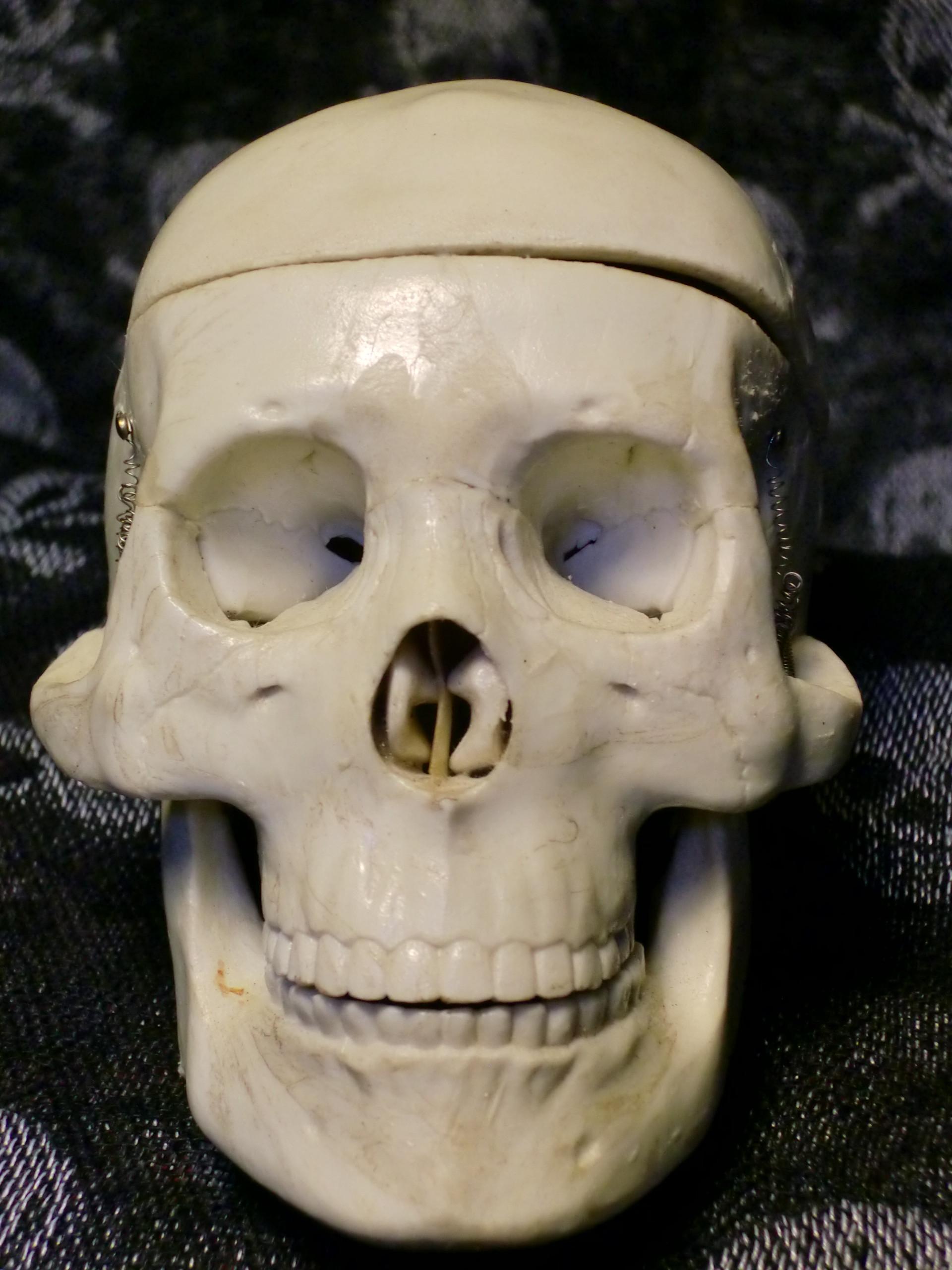 骸骨の画像 p1_20