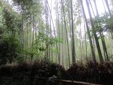 京都嵯峨野に吹く風は〜。