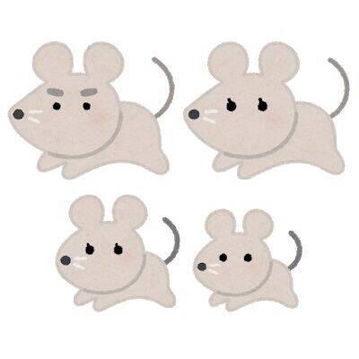 家の中にネズミが出てきた。どうすればいいんだ?