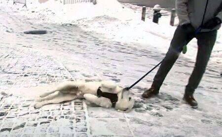 【かわいい放送事故】リポート中のテレビカメラ前から頑なに離れようとしない犬が話題にwwwww