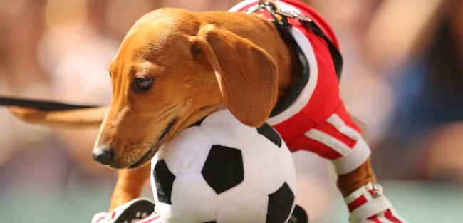 【すげえ】サッカーの試合に乱入した犬、とんでもないスーパープレイをきめてしまうwww