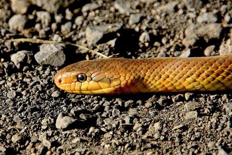 snake-501986_960_720