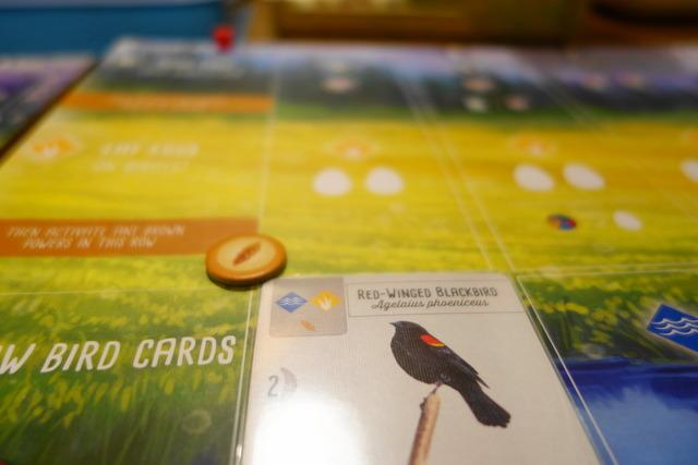鳥カードを水辺に出した
