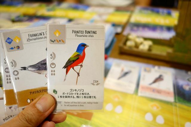ボーナスカードを引ける鳥カード