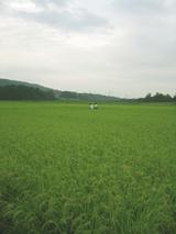田んぼの真ん中