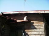 屋根の上の2