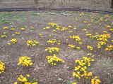 昭和記念公園2花