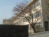 田中小桜1