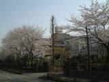 田中小桜4