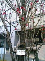 あいぽっく赤い花