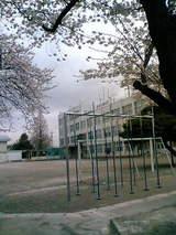 成隣小鉄棒と桜