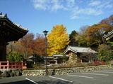 拝島大師の大銀杏