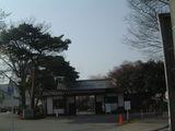 啓明学園桜3