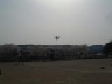 拝島四小桜3