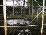 昭和公園11