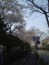 田中小桜3