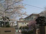 多摩辺中桜3