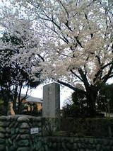 成隣小西門の桜