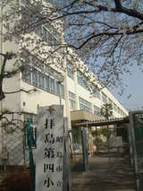 拝島四小桜4