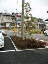 駐車場と植樹
