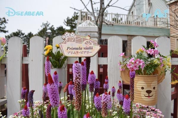 4月春熊インパ5 068