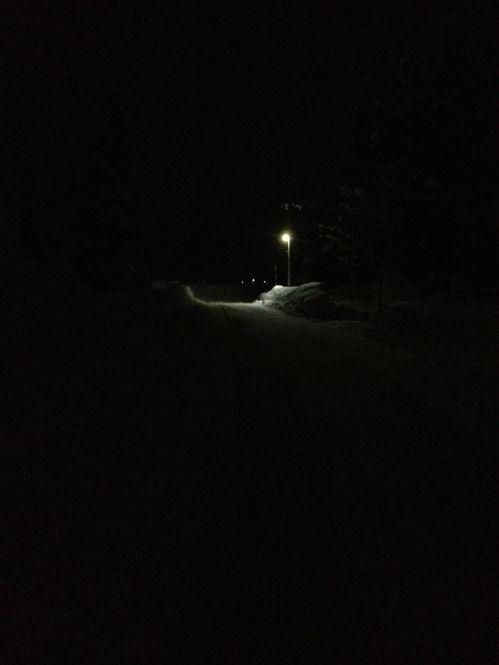 「僕の道、猫の道」です