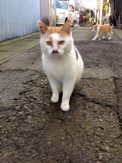 「漁港の猫」です