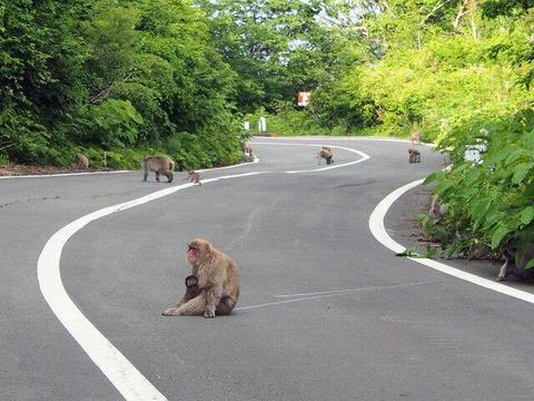 サヨクと猿
