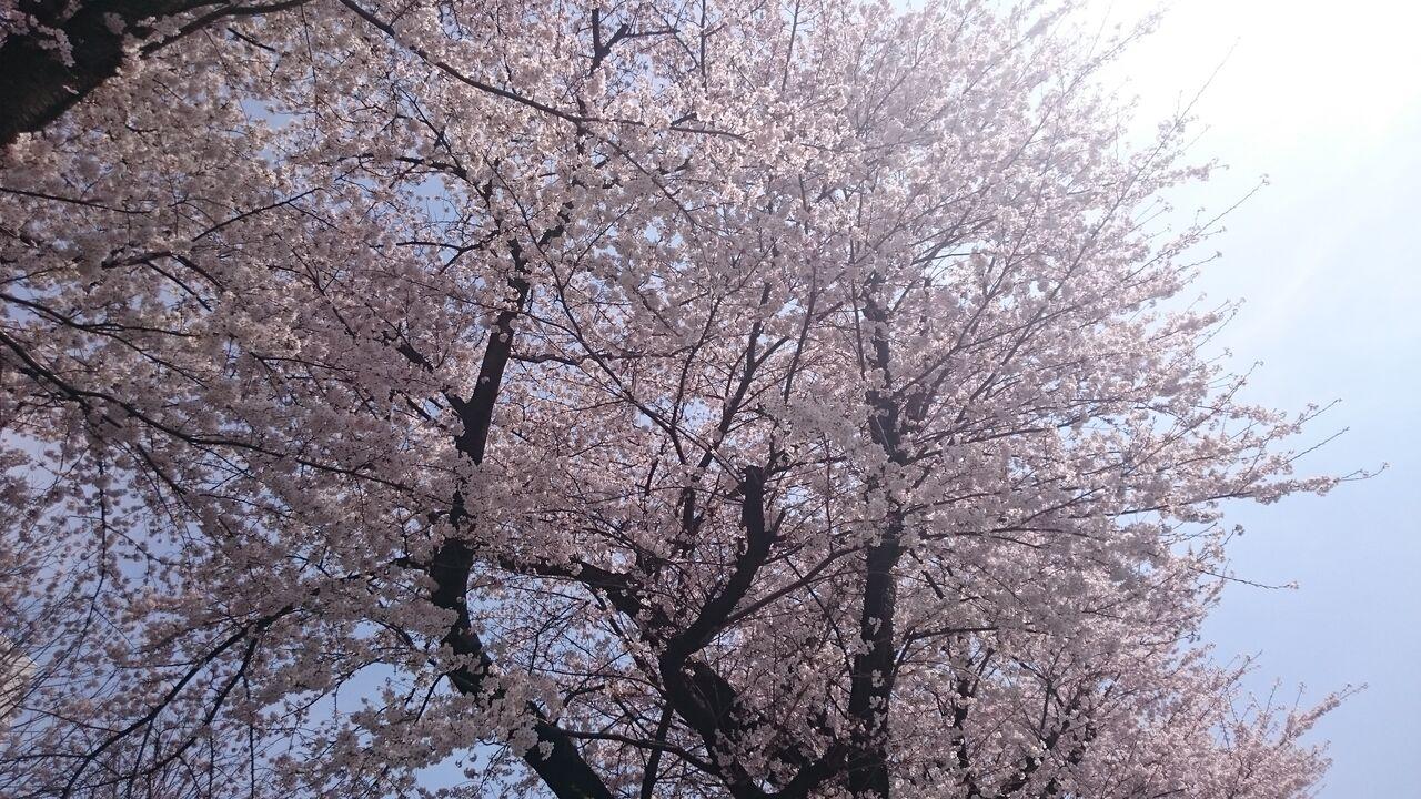 所沢校ブログ今日は何の日?      春分の日。