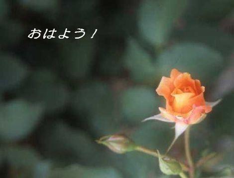 159_tmsf